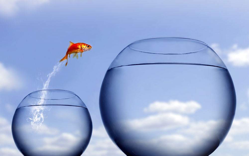 An image of a pet goldfish jumping from one bowl to another.