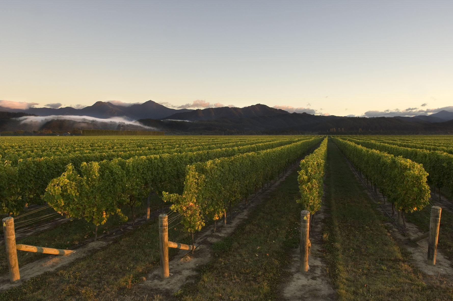 An Image of a New Zealand winery