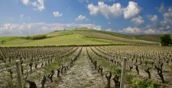 The wine growing region of Sicily