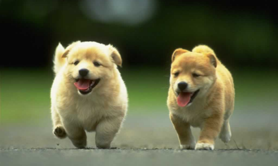 An image of two really cute puppies walking along